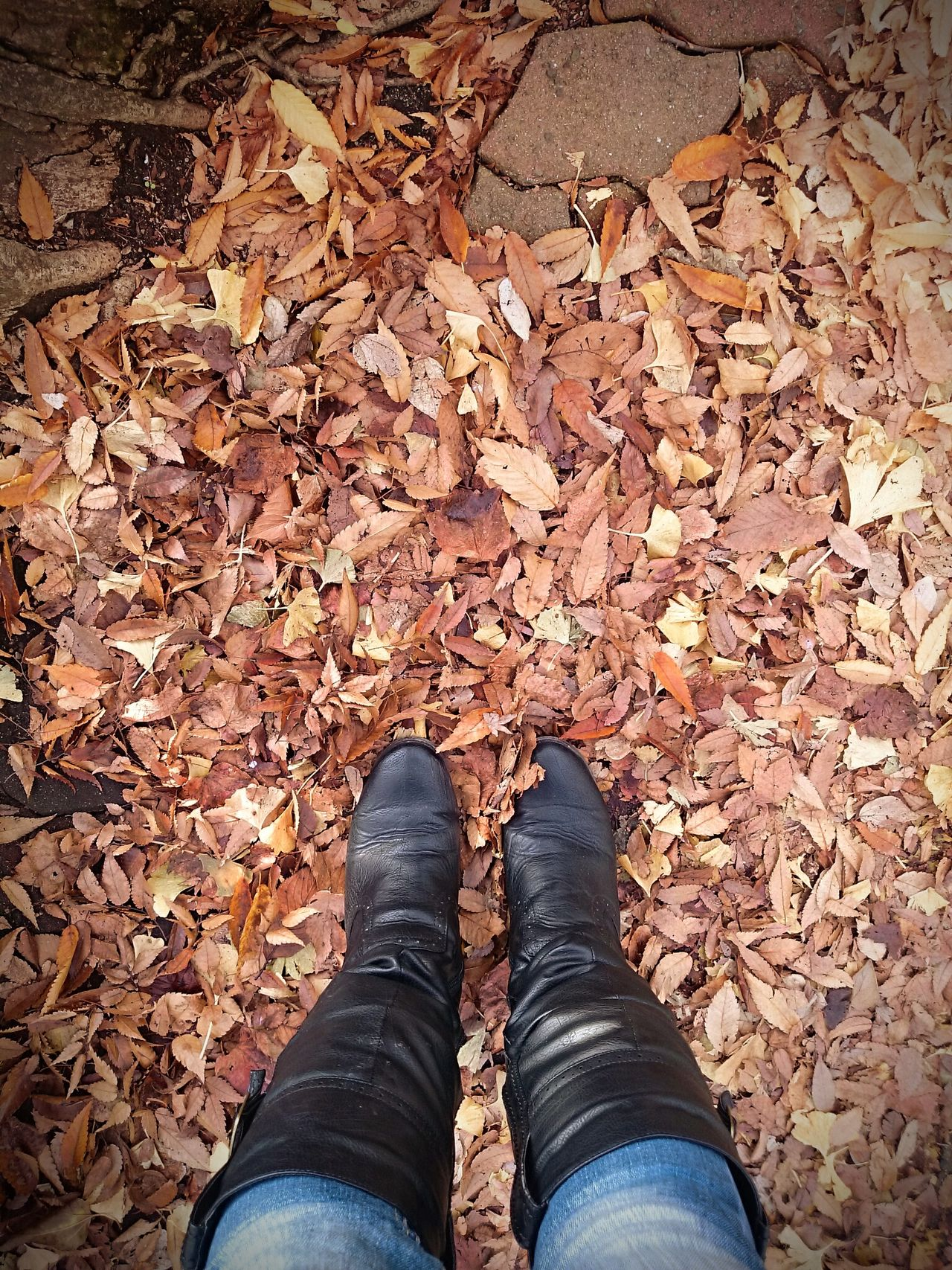 季節の上に立つ。 Standing Personal Perspective Leaf Autumn Human Body Part One Person Lifestyles Real People Nature Day Japan Scenery Tokyo Days Low Section Change Shoe Human Leg People Close-up Tokyo,Japan Tokyo
