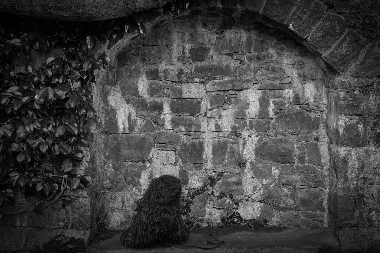 Best Friend Black And White Photography Dog Hungarian Hungarian Puli Outside Photography RASTA Rasta Dog