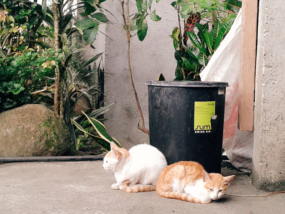 Nap Time. Two Cats Cats Streetphotography Eyemphotography Eyemstreetphoto Eyemcat Naptime Loveit Lovecats GoldenCat Whitecat Whitecatphotography Eyemphotography With Smartphone Eyemphilippines Eyemcaptured Captured Moment