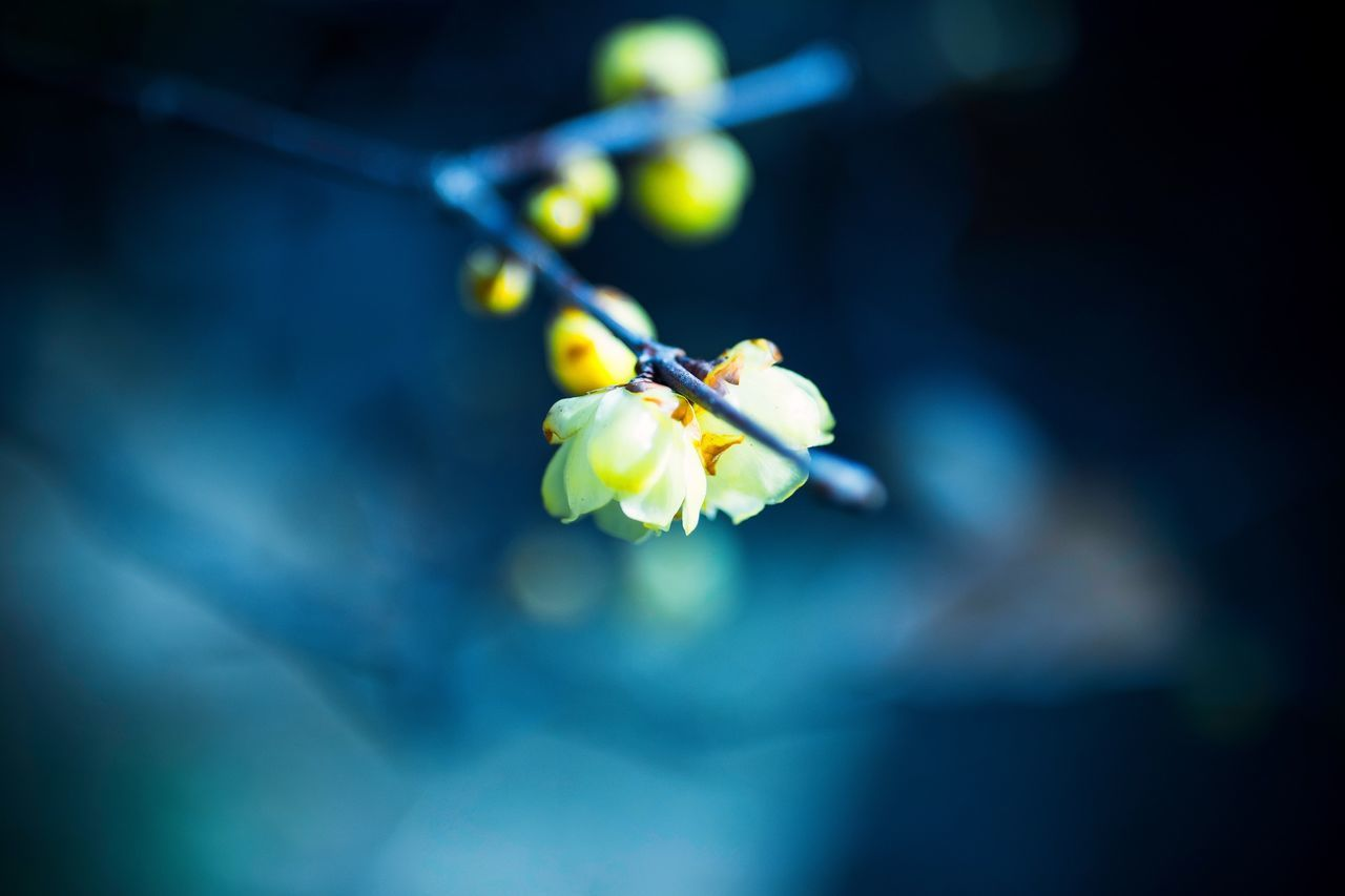 flower, fragility, beauty in nature, nature, freshness, petal, growth, close-up, focus on foreground, outdoors, no people, yellow, plant, flower head, day, blooming