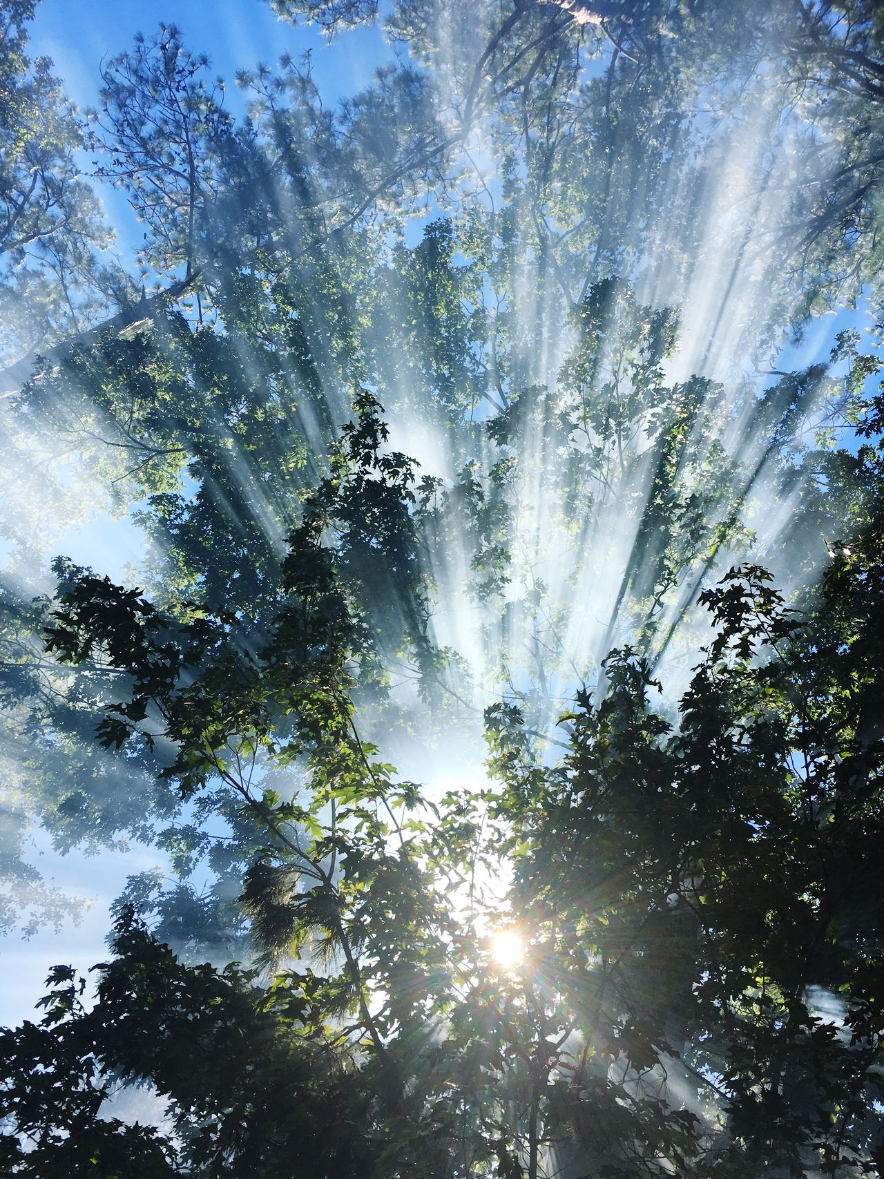 Tree Sunbeam Nature Sunlight Scenics Beauty In Nature Forest Sun Low Angle View No People Outdoors Sky Day EyeEmNewHere