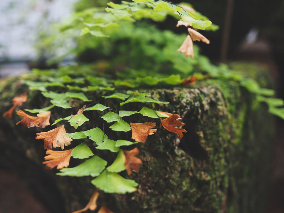 Beauty In Nature Close-up Day Fragility Freshness Green Color Green Life On Stones Green Lıfe Growth Leaf Nature No People Outdoors Plant Tree