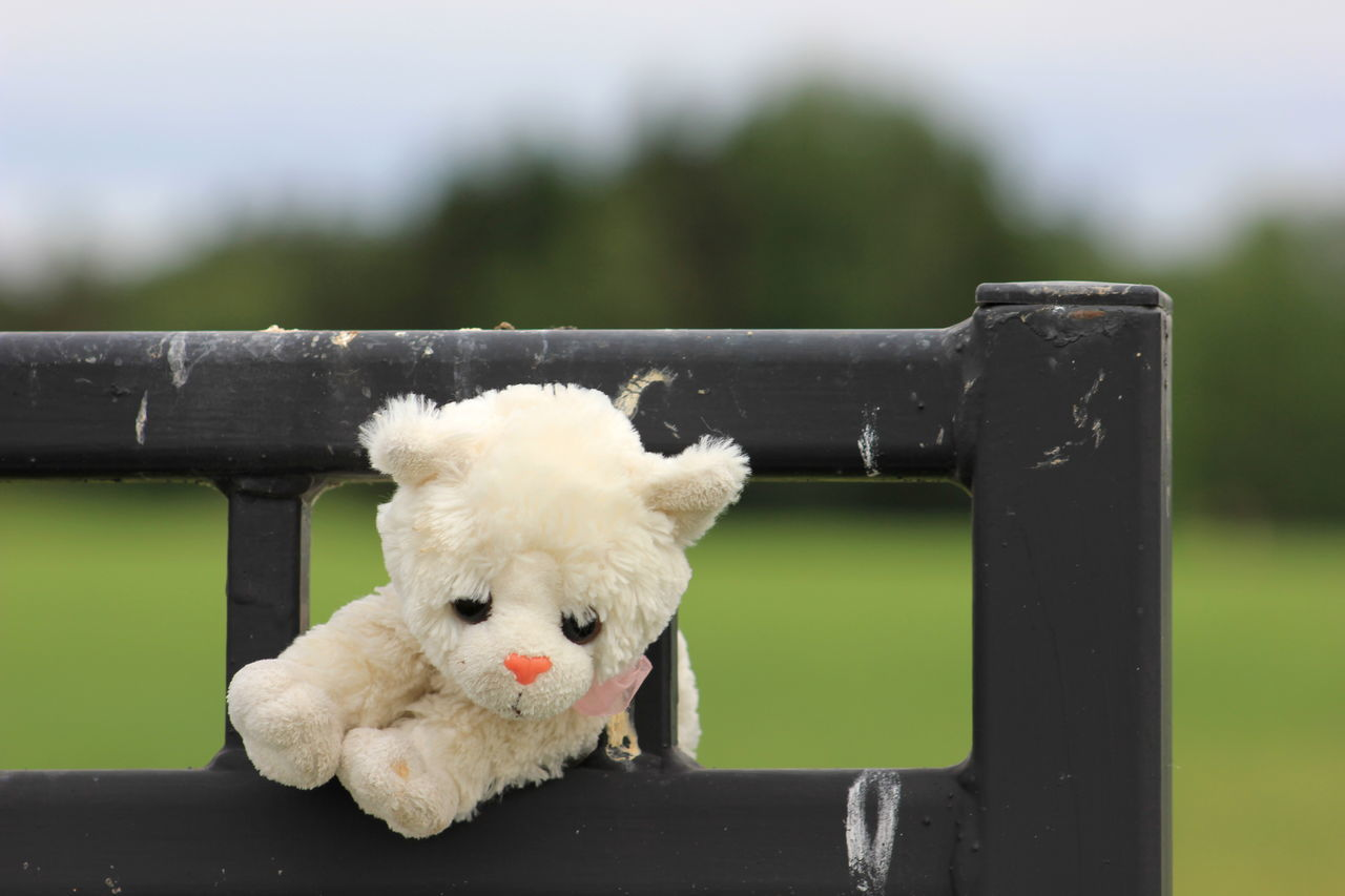 Beautiful stock photos of teddy bear, Animal Representation, Barrier, Day, Focus On Foreground