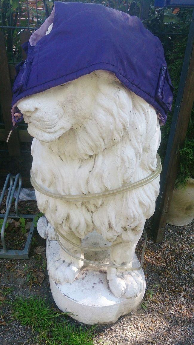 What happened here? Lion Mess Statue Gypsum Brunswick Braunschweig
