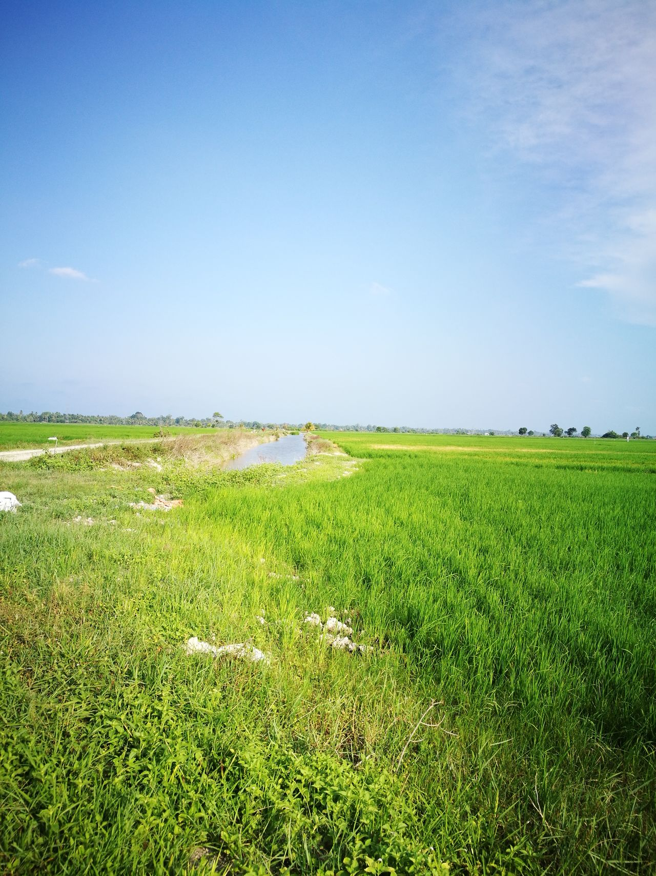 The famer farm...(paddy) Sky Field Green Color Beauty In Nature Landscape Archival Sunlight Social Issues Outdoors Tranquility Scenics Clear Sky Farm Agriculture Rural Scene Growth Plant Day Blue Nature Sports Track Adult First Eyeem Photo Happiness One Man Only