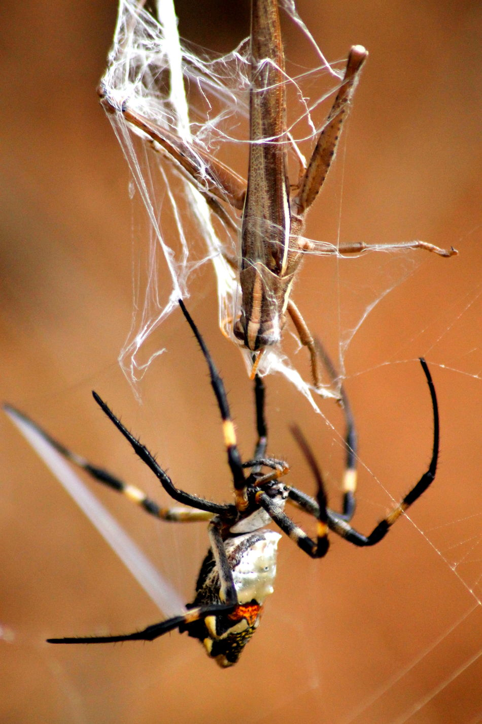 Beautiful stock photos of spider's, Animal Behavior, Animal Themes, Auto Post Production Filter, Close Up
