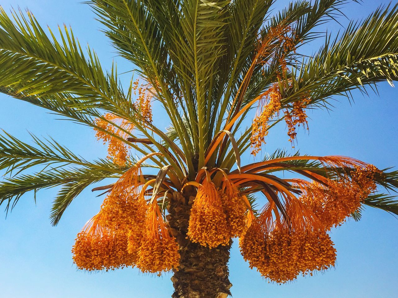 tree, low angle view, palm tree, growth, beauty in nature, day, outdoors, sky, nature, no people, leaf, clear sky, freshness, close-up