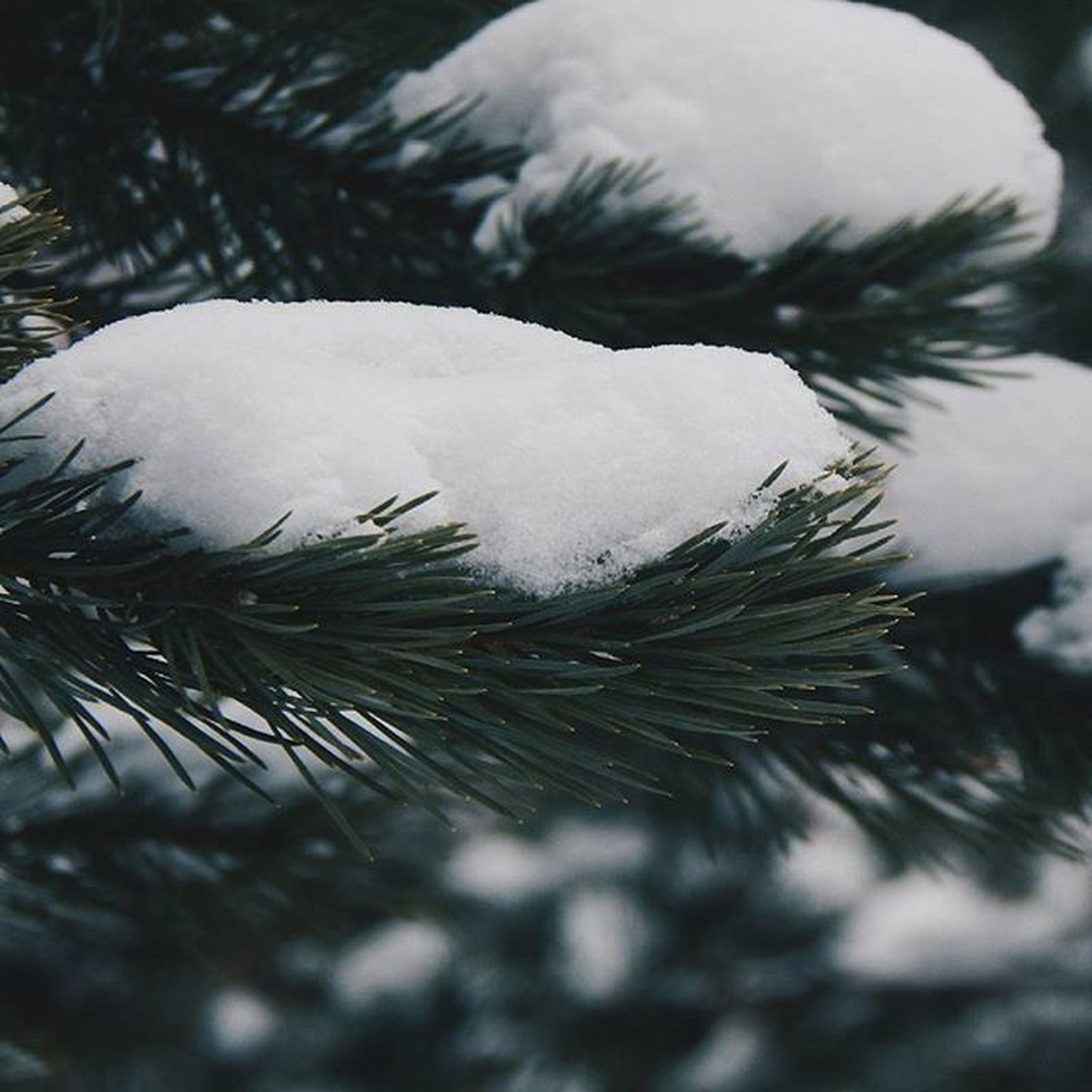 winter, cold temperature, snow, frozen, weather, close-up, white color, season, nature, beauty in nature, focus on foreground, ice, tranquility, growth, white, day, plant, outdoors, fragility, covering