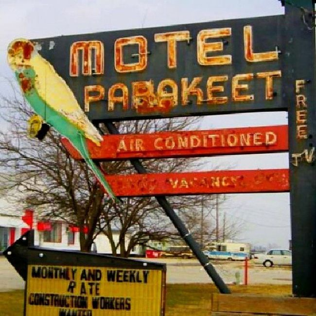 The Parakeet Motel with free TV and a bird in every room - Springfield Missouri Signswitharrows Savethesigns Signjunkie Rous_roadsigns rsa_vintage rsa_rust rsa_rural royalsnappingartists rustlord heyfred_lookatthis rsa_ladies trailblazers_rurex trb_whatsyoursign