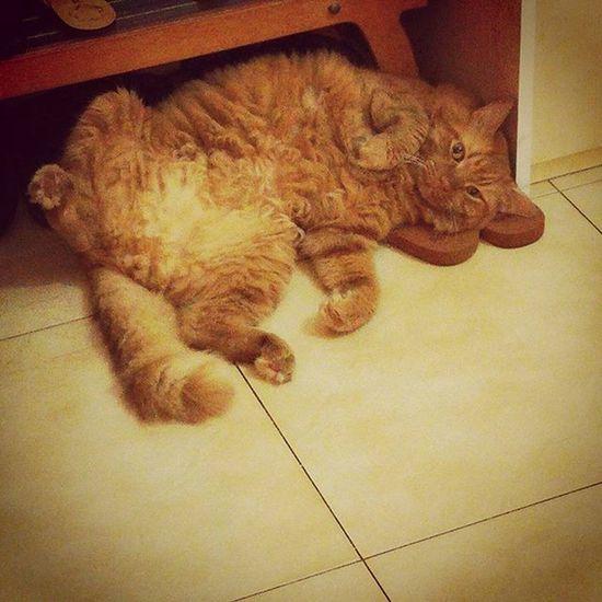 """""""таити-таити..нас и здесь неплохо кормят"""" котикиправятмиром рыжик лучшийкот улыбнуло redcat catz.only catsofinstagram"""