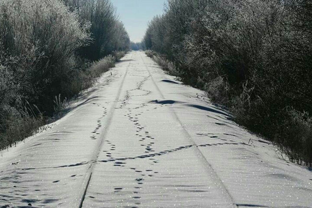 The Purist (no Edit, No Filter) Train Tracks Deer Tracks Snow