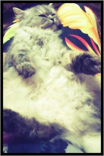 my kitty cat :)