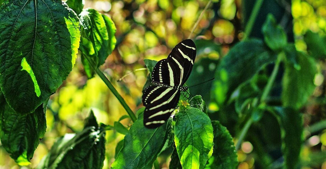 green color, animal themes, animals in the wild, insect, one animal, leaf, butterfly - insect, nature, growth, focus on foreground, animal wildlife, no people, close-up, outdoors, plant, day, beauty in nature, animal markings, perching