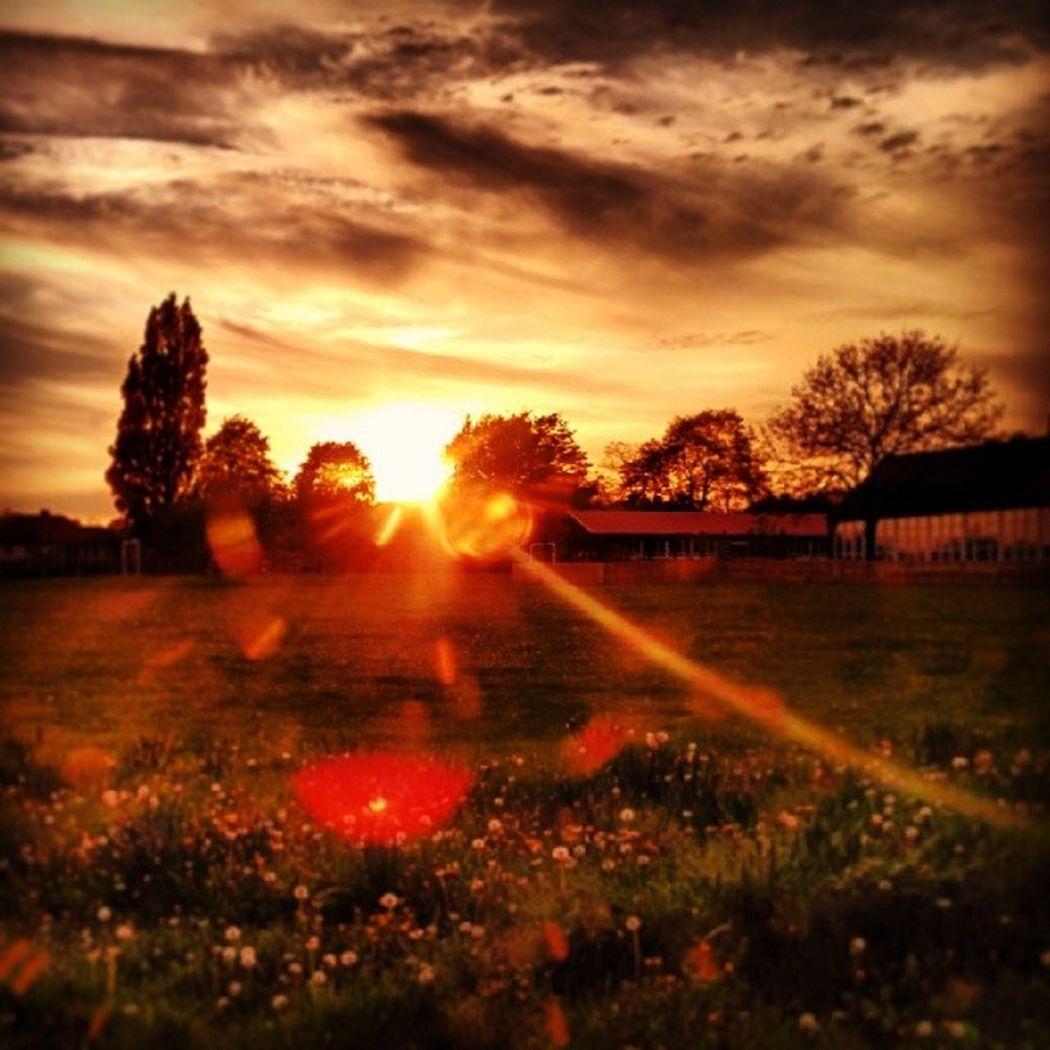 Bristol City Southmead Beautiful sunset sunny sun cloud sky tree brown filter park miracle wonder lucid dream cobweb art