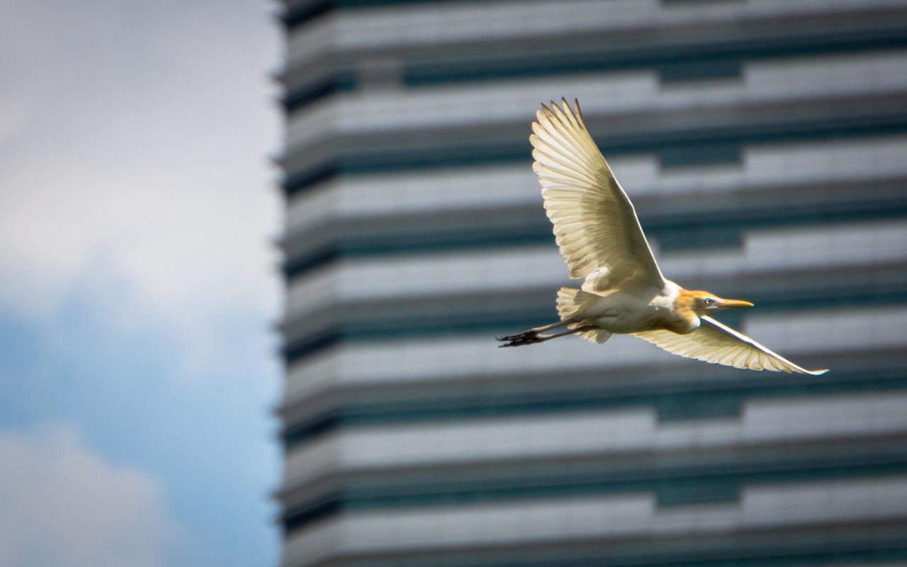 Animal Themes Animal Wildlife Animals In The Wild Architecture Bird Building Exterior Built Structure Close-up Day Flying Focus On Foreground Low Angle View Nature No People One Animal Outdoors Spread Wings