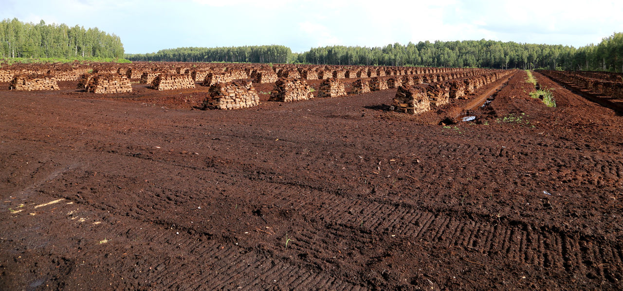 peat is stacked in rows waiting for transport in a forest in Latvia. Agriculture Fossil Fuel Evening Light Fossil Fuels Harvesting Peat Heating Period Landwirtschaft Lagerung Lettland  Latvia Peat Peat Bog Peat Extraction Peat Field Peat Mining Renewable EnergyBog Peat Brennstoff Swamp Torfabbau Torfballen Torffabrik Torffeld Travelling The Baltic States Wald Und Torf