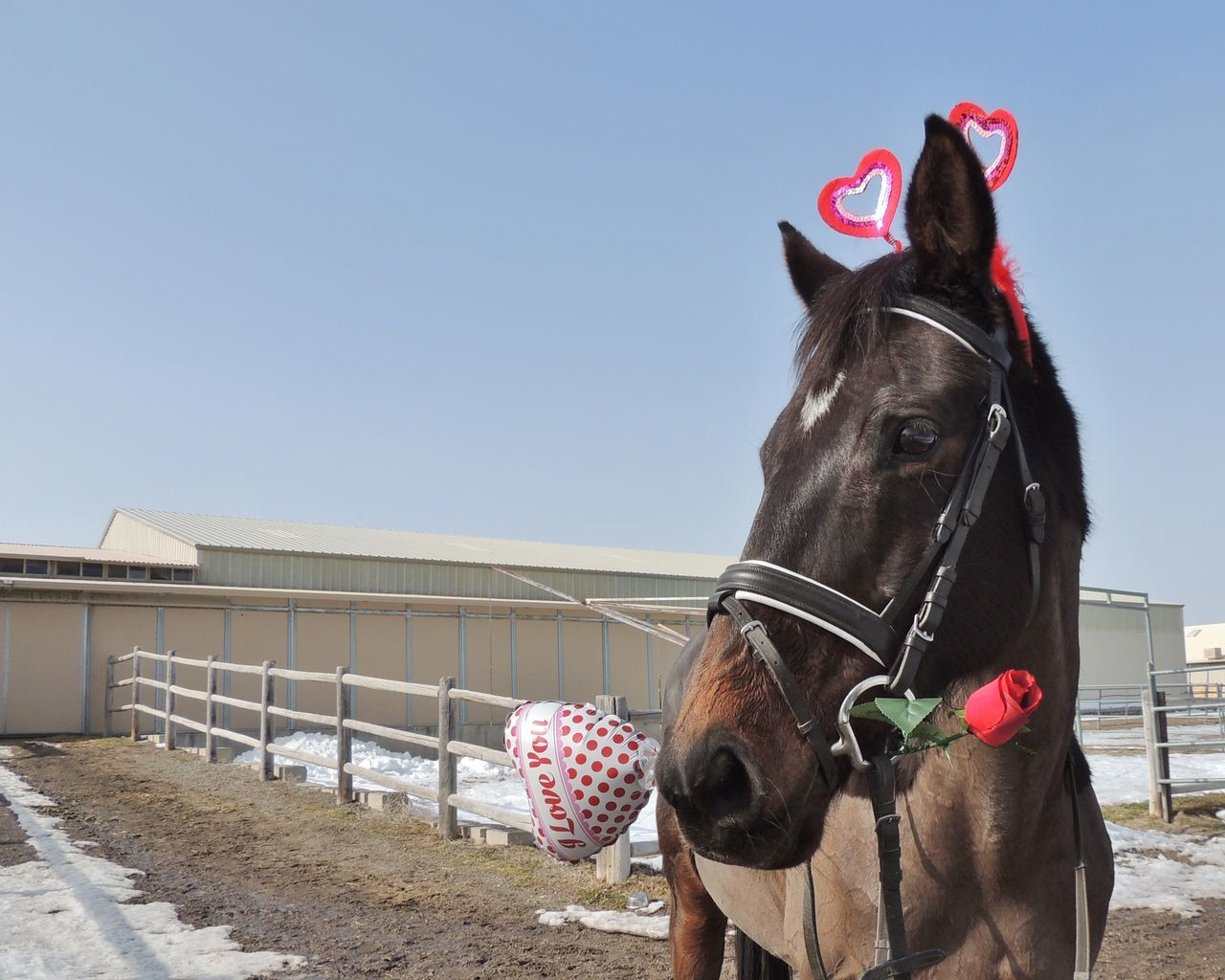 Beautiful stock photos of valentinstag, Animal Themes, Bridle, Building Exterior, Built Structure