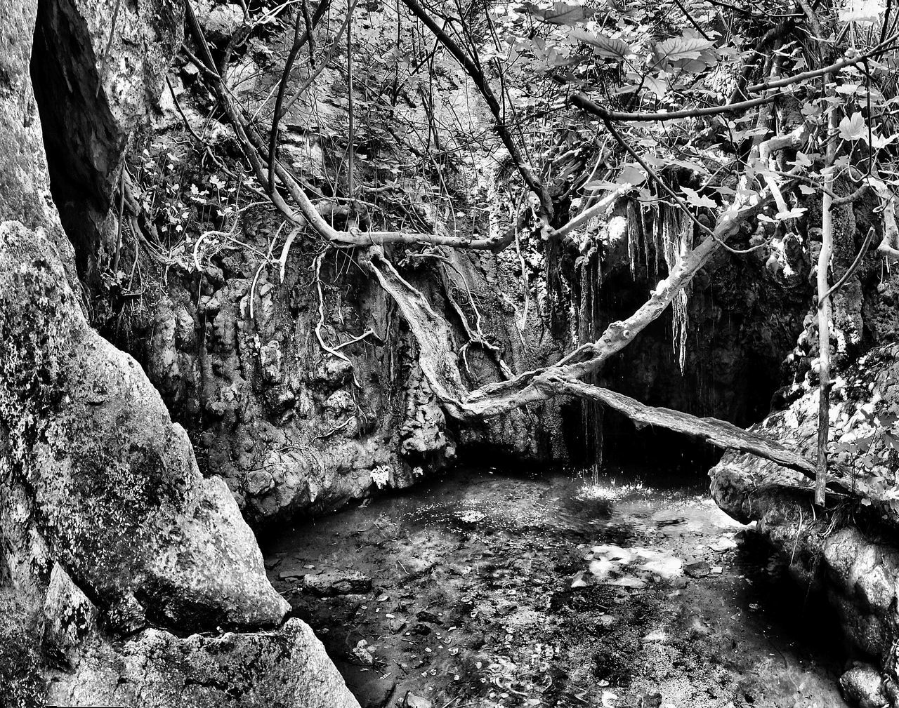 Aphroditie's Baths Aphroditie's Spring Beauty In Nature Branch Cyprus Day Forest Growth Lachi Cyprus Moss Nature No People Outdoors Rock - Object Rock Formation Rough Scenics Textured  Tranquil Scene Tranquility Tree Tree Trunk Water Wood - Material
