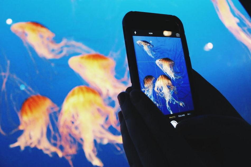 Aquarium Vancouver Vancouver Aquarium Jellyfish