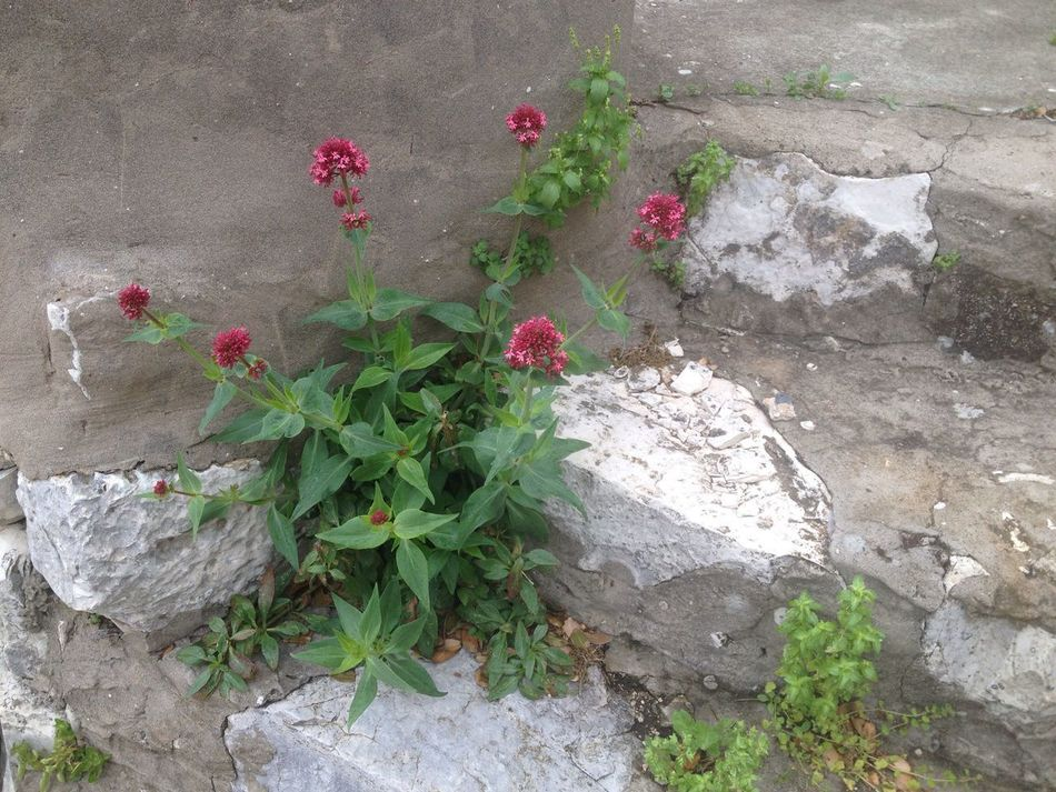 Stones Stone Wall Steps No People Rock - Object Growth Flower Plant Outdoors Nature