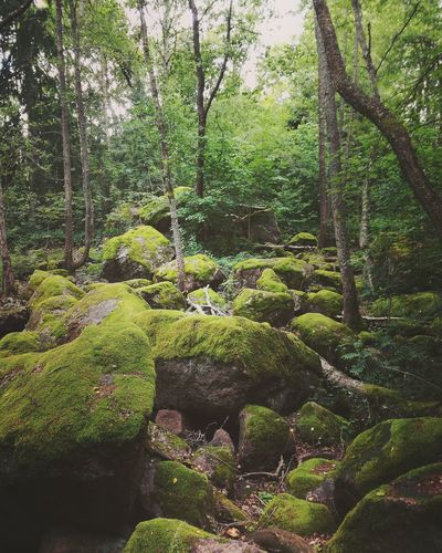 Nature Growth Green Color Day No People Beauty In Nature Plant Outdoors Trees Freshness Mossyforest Mossy Stones Forest Serene Outdoors Finland Pristine