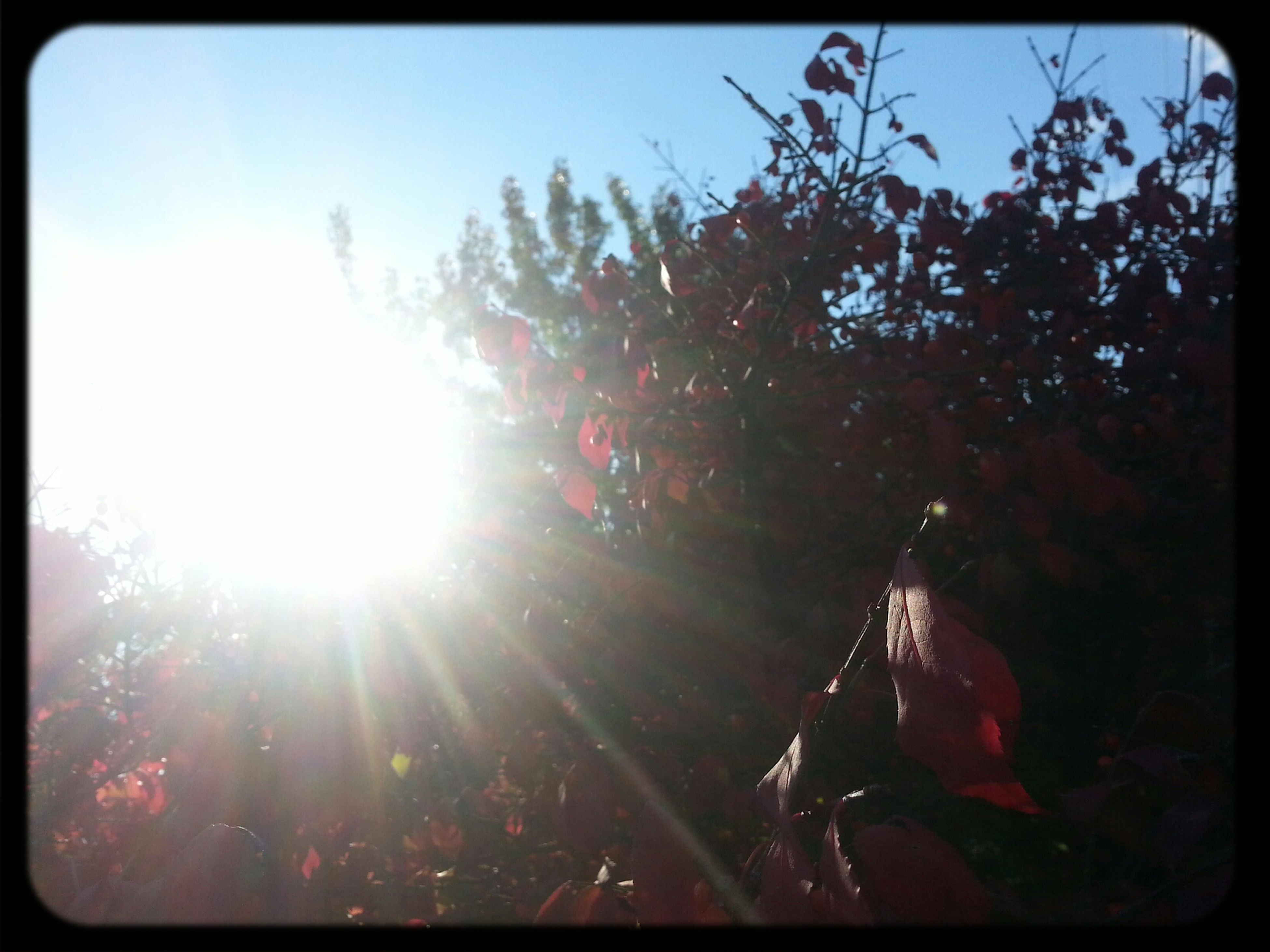 transfer print, sun, sunbeam, lens flare, sunlight, tree, auto post production filter, low angle view, growth, bright, sky, nature, sunny, beauty in nature, day, outdoors, tranquility, back lit, clear sky, silhouette
