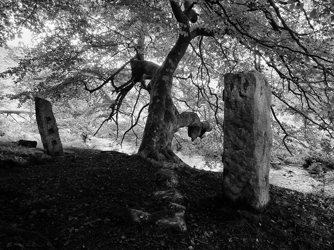 tree and two stones Branch Day Nature No People Outdoors Sky Standing Still Standing Stones Tranquility Tree Tree Trunk