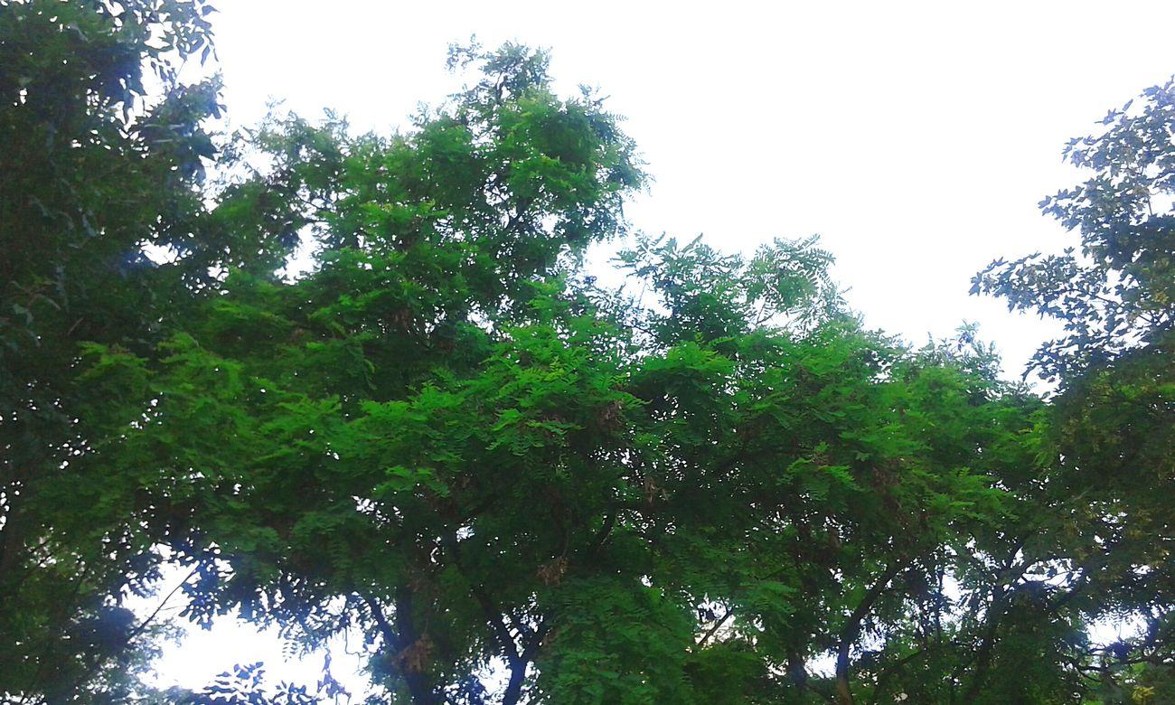 Nature's Diversities - 2016 EyeEm Awards Nature's Diversities Sky Trees Green Nature Beautiful View From Below Leaves