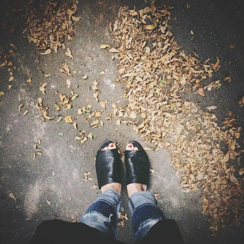 秋天 Fall Autumn