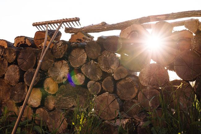 Evening Field Sun Sunlight Sunset Wood Market Reviewers' Top Picks