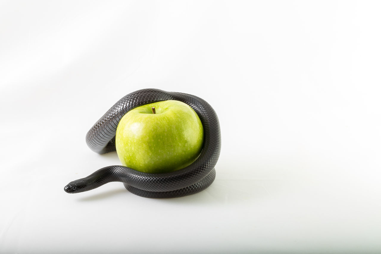 Close-Up Of Snake On Granny Smith Apple Over White Background