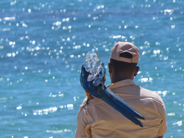 Lifeguards Bird Blue Casual Clothing Dominican Republic Keeper Leisure Activity Lifestyles Nature Outdoors Parrot Rippled Sky Tropical Climate Vacations Water Zoo