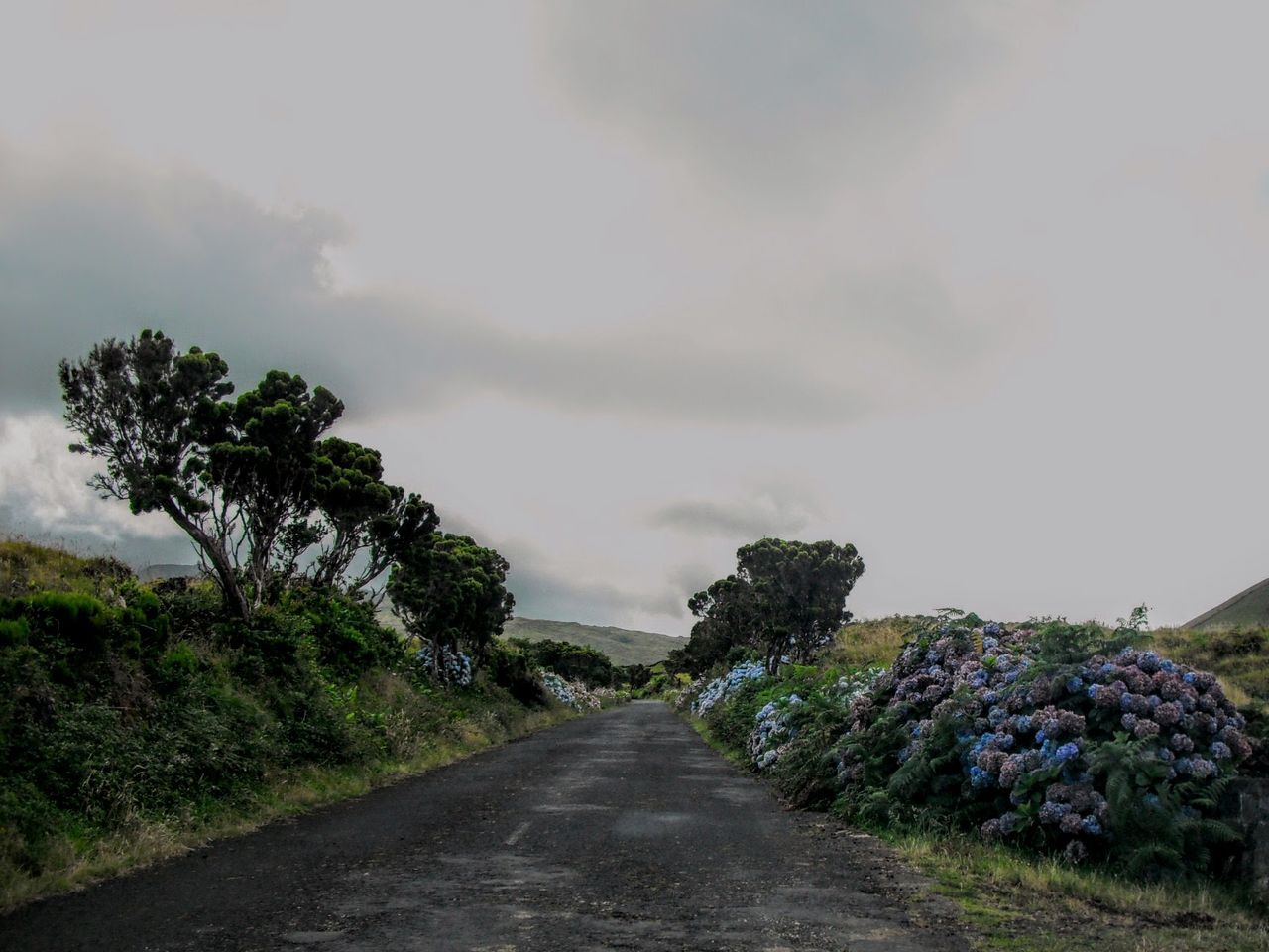 Azores - Pico Island Azores Islands Beauty In Nature Cloud Cloud - Sky Cloudy Country Road Day Diminishing Perspective Empty Empty Road Landscape Long Nature No People Outdoors Pico Plant Road Scenics Sky The Way Forward Tranquil Scene Tranquility Tree Vanishing Point