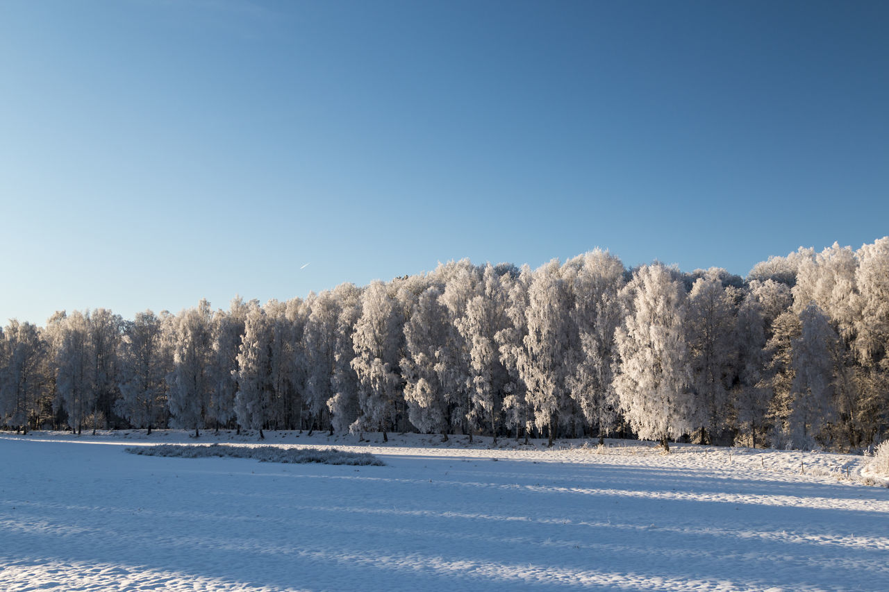 Blue Blue Sky Clear Sky Cold Temperature Exceptional Photographs EyeEm Best Shots First Eyeem Photo Frosty Trees Frozen Hello World Landscape Landscape_Collection Nature Nature Outdoors Scenic Scenics Sky Snow The Week Of Eyeem Tranquil Scene Tranquility Tree What Who Where Winter