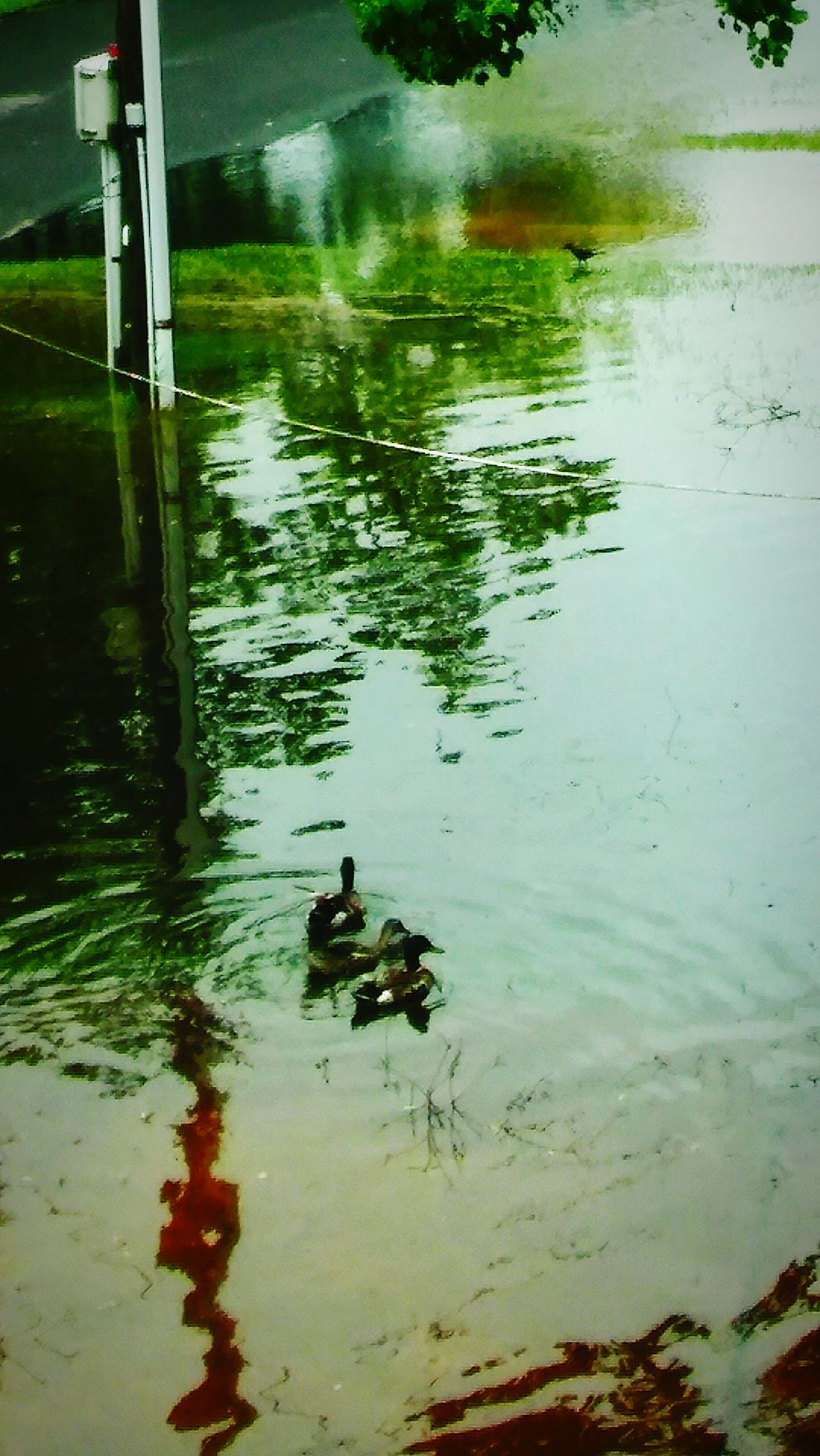 LocalDuck'sSwimmingInTheDriveWay Water Swimming Animals In The Wild Animal Wildlife Animal Themes No People Lake Outdoors Peaceful Moment Reflections And Shadows Freshness Eye4photography  EyeEm Best Shots - Nature EyeEm Nature Lover TropicalstormCindy WasInAWE Nature I💗MallardDuck's💞💞 Reflections Full Frame Shot
