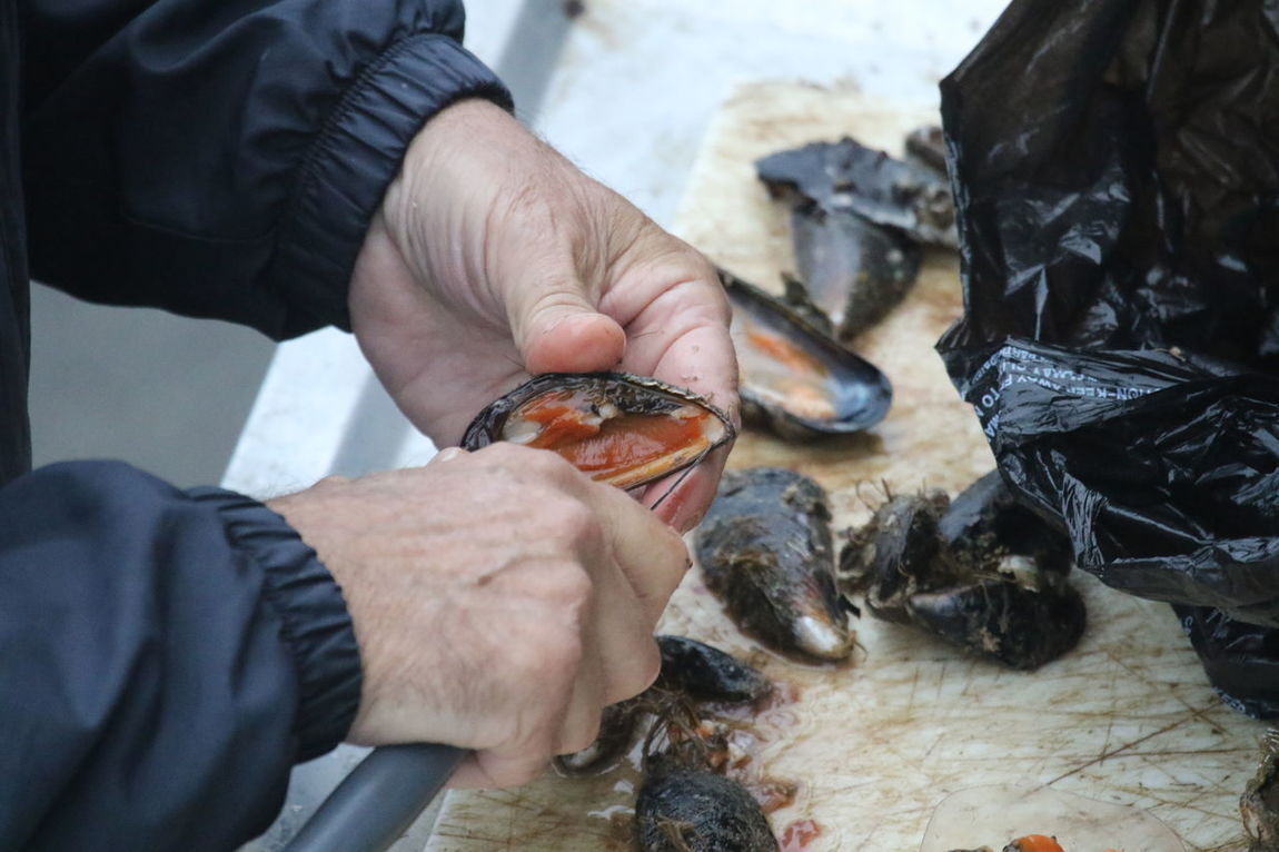 Clams Close-up Cracking Clams Freshness Healthy Eating Human Hand Leisure Activity Mussels One Person Outdoors Seafood