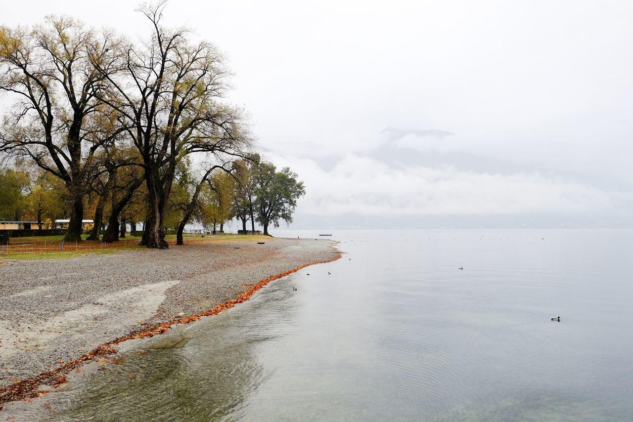 Beautiful stock photos of danke,  Autumn,  Beach,  Beauty In Nature,  Change