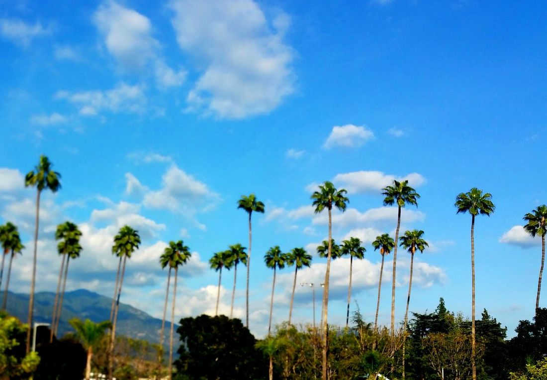 California Dreaming California Palm Trees Sky Sky And Clouds Sky_collection Sky And Palm Tree Atmospheric Mood Relaxing Mood Softness Natural Beauty Enjoying Life Street View Distance Breeze calming Walking Around View Enjoying The View Enjoy Life