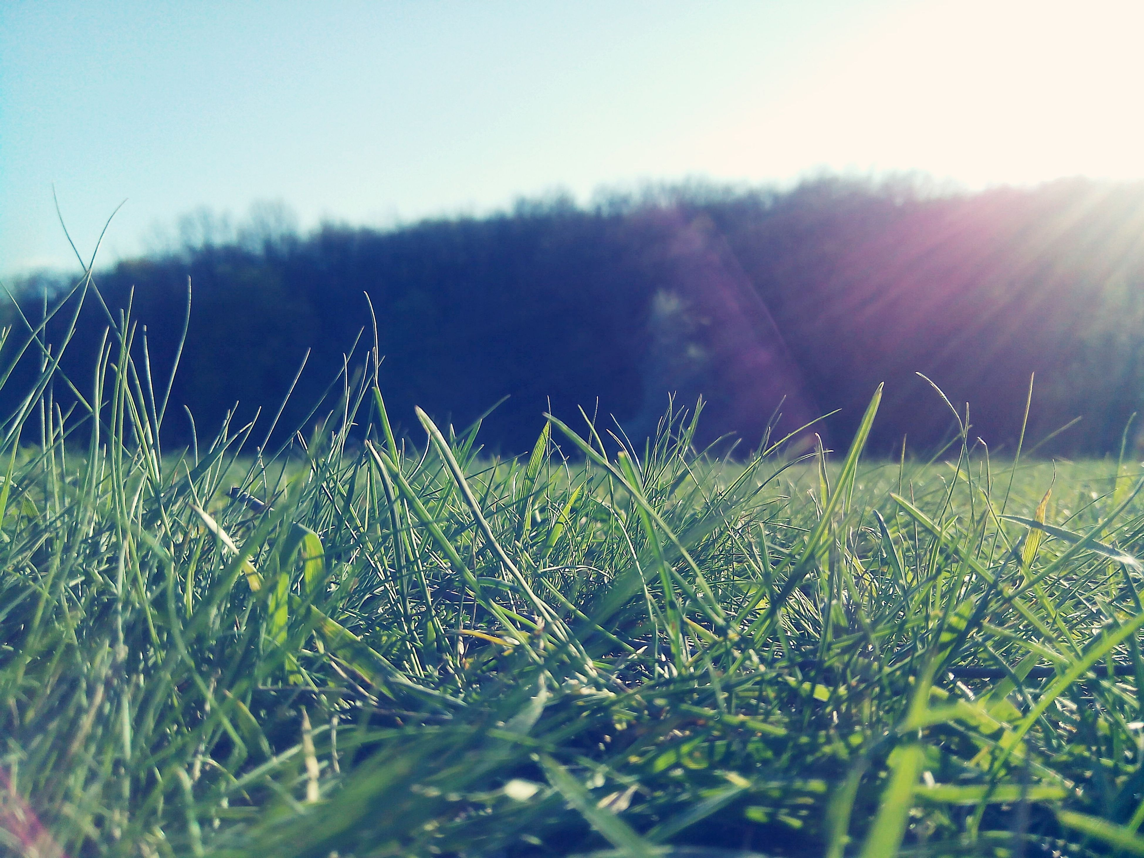 grass, field, growth, nature, tranquility, beauty in nature, plant, clear sky, drop, tranquil scene, close-up, landscape, focus on foreground, lens flare, sunlight, sun, blade of grass, scenics, rural scene, day