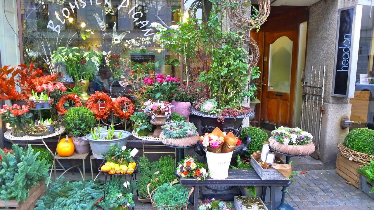 Beauty In Nature Choice Day Flower Flower Shop Freshness Greenhouse Growth Nature No People Outdoors Plant Potted Plant Variation
