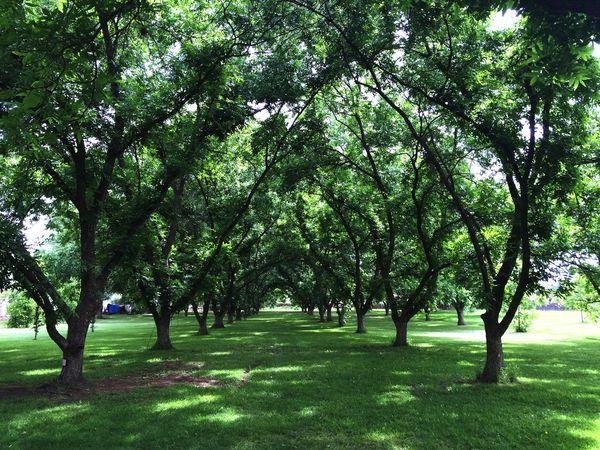 Belleza Natural Tequisquiapan Hacienda Isherphoto Isherqro Querétaro Green