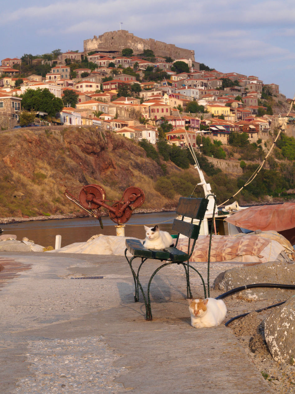 Cats in the port of Molyvos, Lesbos, Greece Animal Themes Architecture Building Exterior Built Structure Byzantine Castle Cat Day Domestic Animals Evening Greece Lesbos Mammal Medieval Molyvos Outdoors Pier Port Sky Stone Sunset Town Travel Destinations