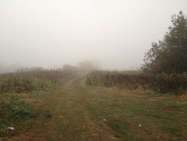 Footpath Field Plant Nature Fog Foggy Tranquil Scene Tranquility Weather The Way Forward Landscape Non-urban Scene Scenics Beauty In Nature Sky Messy Growth Diminishing Perspective Treelined Outdoors Remote Vanishing Point Mist