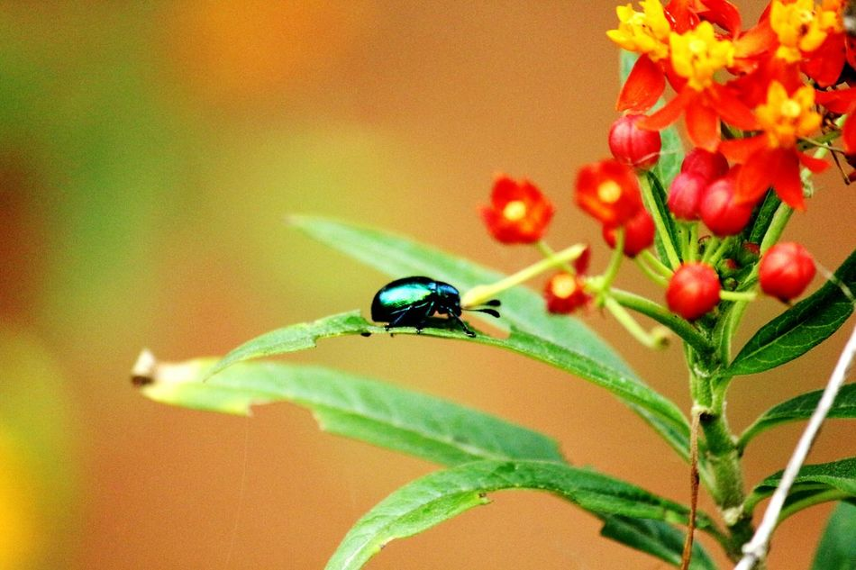 Beetle Flowers Flower Photography Flower With Insect Nature Exposure Beetle Insect Nature
