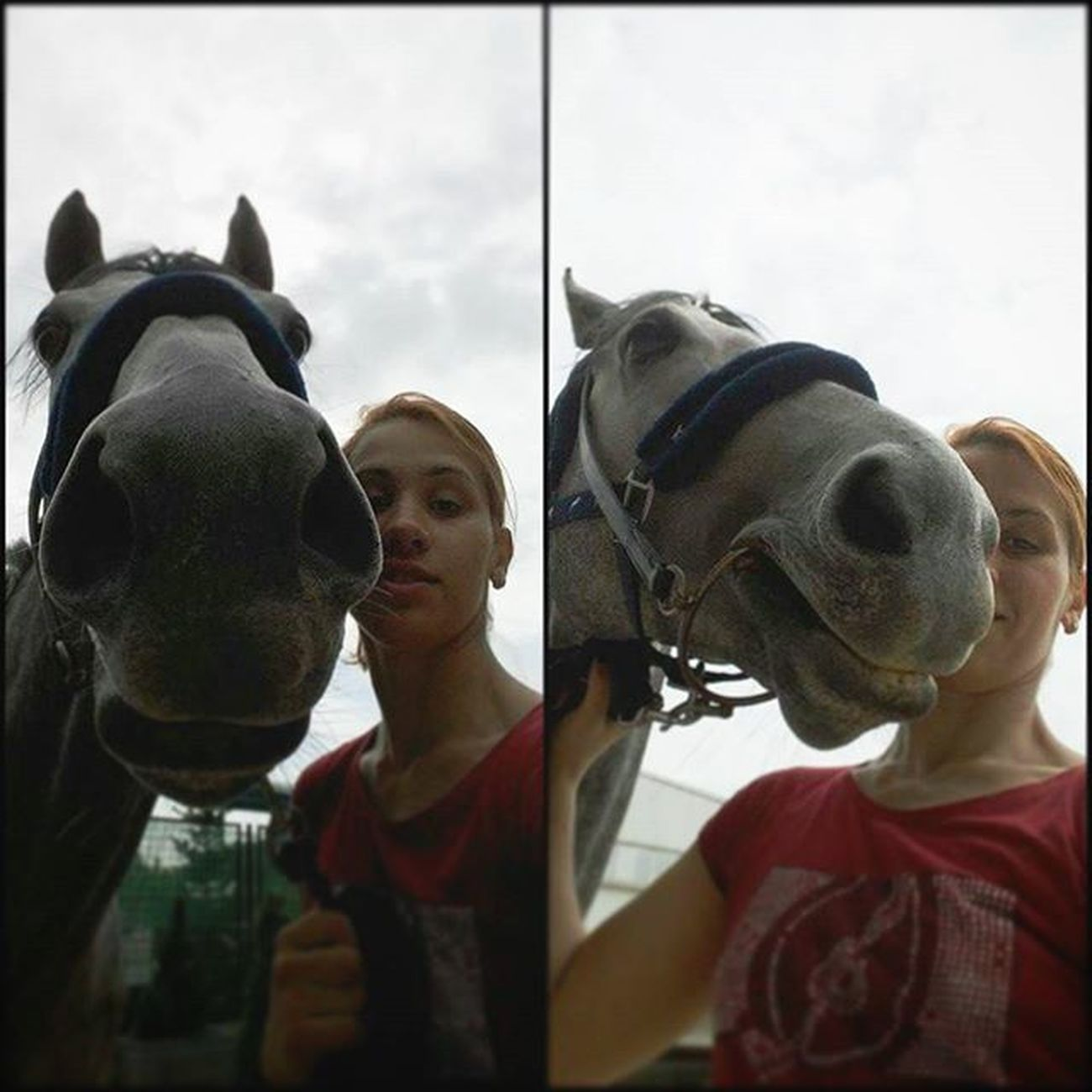 It was just one of those crazy stupid weird things that can happen to you on life. 🏇💖🐾🌟❤📷 Instagram Thoroughbredsofinstagram Thoroughbredlove Thoroughbreds purasangreingles selfie helfie horse horsesofinstagram