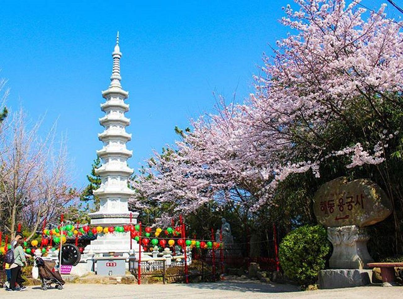 🙏 부산살면서도, 이제서야가네. 그린카 해동용궁사 부산여행 용궁사 차스타그램 카스타그램 벚꽃 드리이브 풍경 출사 기장 빈카메라 Pusan Busan Korea Travels Trip Journey Landscape Bincamera