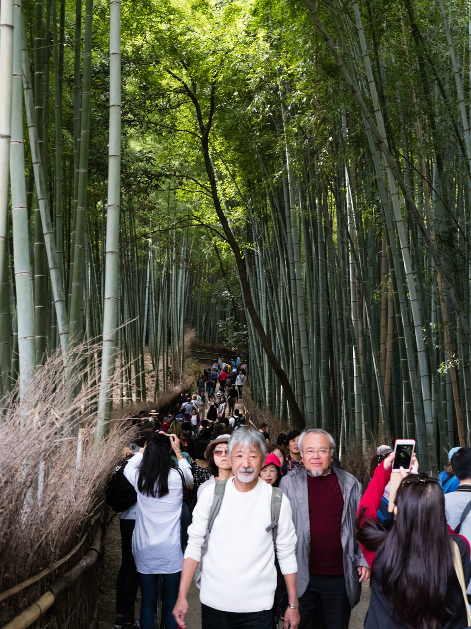 outdoors, tree, forest, senior adult, day, togetherness, looking at camera, young adult, nature, bamboo grove, bamboo - plant, portrait, young women, smiling, real people, women, standing, adult, people, adults only