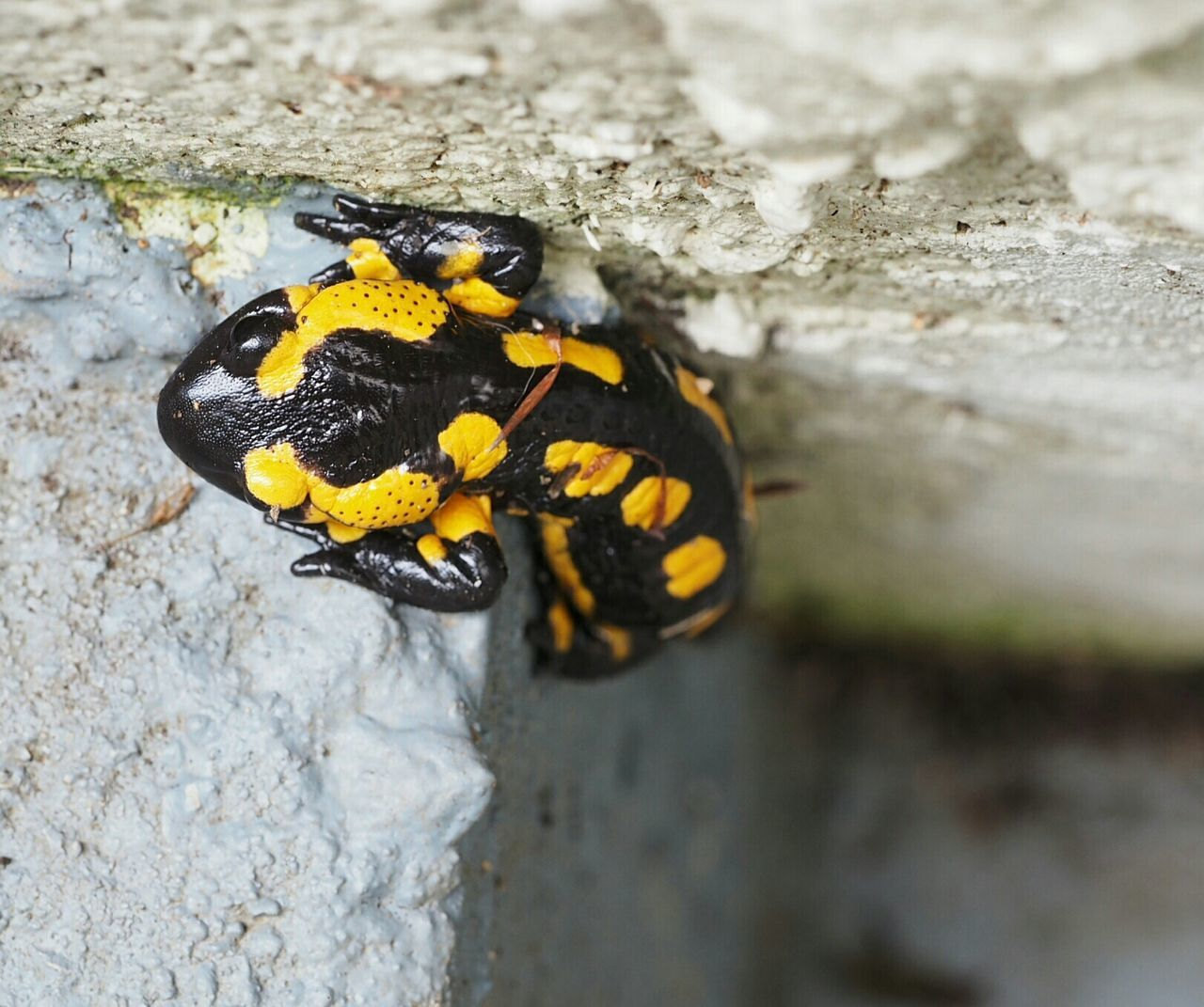 animal themes, animals in the wild, insect, one animal, close-up, animal wildlife, day, ladybug, yellow, outdoors, no people, nature, tiny