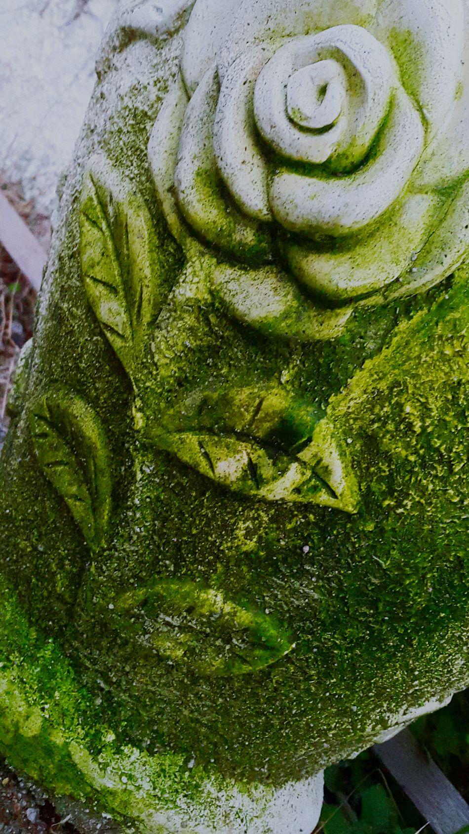 Natural Green  First Eyeem Photo