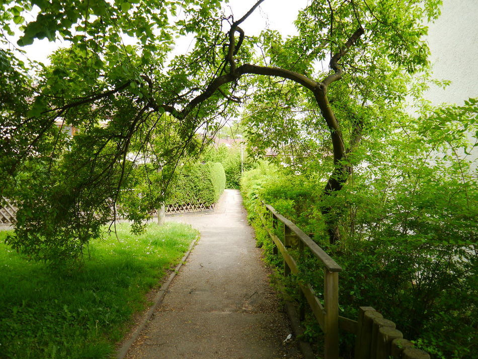 Beauty In Nature Bogen Footpath Green Color Nature Outdoors Pathway The Way Forward Tree Walkway Wege Und Strassen The Great Outdoors - 2016 EyeEm Awards The Great Outdoors – 2016 EyeEm Awards The Great Outdoors Still Life